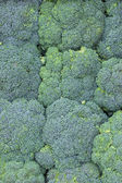 Bunch of broccoli background — Stock Photo