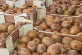 Kiwi in the boxes at farmers market — Stockfoto