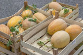 Farmers market and melons in a wooden crates — Stockfoto