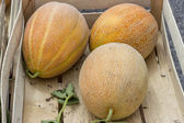 Farmers market and three melons in a wooden crate — Stock Photo