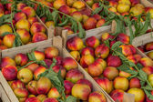 Farmers market nectarines in a wooden crates — Stock Photo