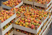 Farmers market organic apricots in a wooden crates 2 — Stock Photo