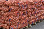 Farmers Market Onion Sacks — Stock Photo