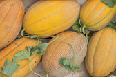Farmers market melons in a wooden crates, background  — Stock Photo
