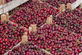 Farmers market organic cherrys in a wooden crates 3 — Stockfoto