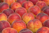 Farmers market peaches background 2 — Stock Photo