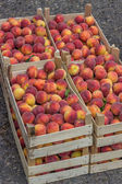 Farmers market peaches in a wooden crates 2 — Stock Photo