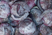 Farmers market red cabbage background — Stock Photo