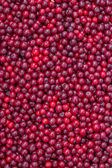 Farmers market sour cherry background — Stock Photo