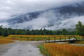 Alaska meadow — Stock Photo