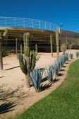 Cactus garden decoration — Stok fotoğraf