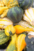 Squashes in yellow and green — Stock Photo