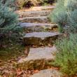 Garden path — Stock Photo #38061369