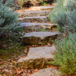 Garden path — Stock Photo