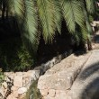 Old stone structure and palm leaves — Stock Photo