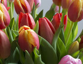 Colorful Tulips full frame — Stock Photo