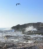 Seagull Choppy Seas — Stock Photo