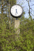 Clock in green spring foliage at five thirty pm — Stock Photo