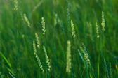 Grass and sunset — Stock Photo