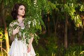 Blooming acacia — Stock Photo