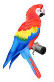 Colorful parrot macaw isolated on white background — Stock Vector