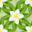 Spring ecological background with beautiful white flower and fresh leaf — Stock Vector