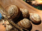 Group of Snail Shell — Stock Photo