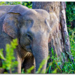 Stock Photo: Elephant portrait