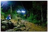 在晚上的森林 — 图库照片