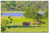 Rådjur äter gräs — Stockfoto