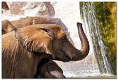 Elephant (elephants) in a natural park. (Spain, Valencia) — Foto de Stock