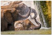Elephant (elephants) in a natural park. (Spain, Valencia) — Stock Photo