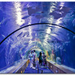 Valencia L'Oceanographic Center - underwater tunnel to see marine life — Stock Photo