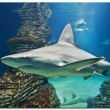 Shark at aquarium in Valencia — Stock Photo