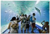 Valencia L'Oceanographic Center - underwater tunnel to see marine life — Zdjęcie stockowe