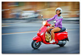 Woman ridding a motorbyke on the streets of Pisa Italy — Stock Photo