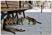Cats on street of Nicosia Cyprus — Stock Photo