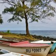 Stock Photo: Row of canoes