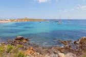 Coastline in Tabarca, Alicante, Spain — Stockfoto