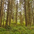 Rain Forest at Olympic National Park — Stock Photo