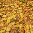 Fall Color Leaves Oregon — Stock Photo