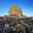 Cannon beach — Stock Photo #27226703