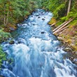 A beautiful flowing river in mount rainer national park — Stock Photo