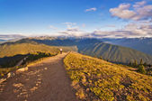 The Beautiful Hurricane Ridge at Olympic National Park with Wildflowers in foreground — Stock Photo