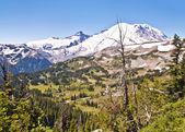 Mt Rainier Valley from Sunrise Visitor center — Stock Photo