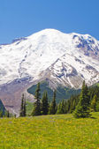 The beautiful view of mt rainier — Stock Photo