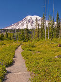 The Beautiful Trail Leading to Mt Rainier — Stock Photo