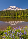 The beautiful reflection of Mt Rainier in the reflection lake — Stock Photo