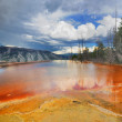 A bacterial pool from Mammoth Hot Springs — Stock Photo