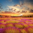 Beautiful lavender field at sunset time — Stock Photo